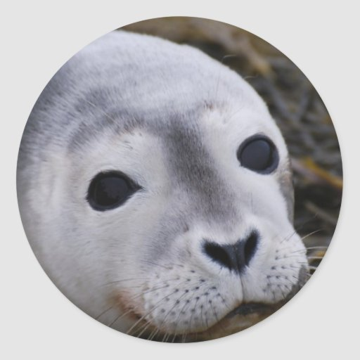 Sweet Baby Seal Stickers