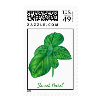 Sweet basil postage stamp