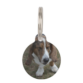 Sweet Basset Hound Pet Name Tag