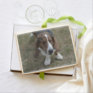Sweet Basset Hound Shortbread Cookie