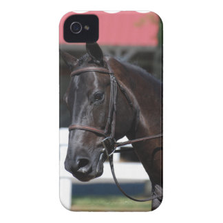Sweet Bay Horse iPhone 4 Cover