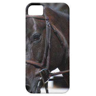 Sweet Bay Horse iPhone 5 Covers