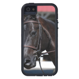 Sweet Bay Horse iPhone 5 Cover