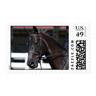 Sweet Bay Horse Stamps