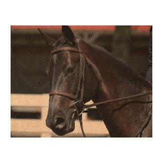 Sweet Bay Horse Queork Photo Prints
