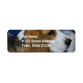 Sweet Beagle Label