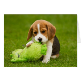 Sweet Beagle Puppy with Cuddly Toy Card