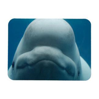 Sweet Beluga Whale Flexible Magnet Rectangle Magnet