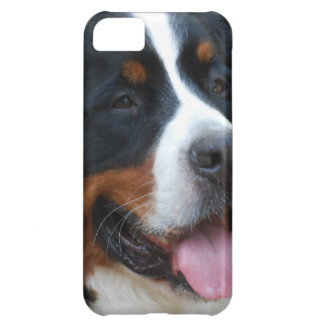 Sweet Bernese Cover For iPhone 5C