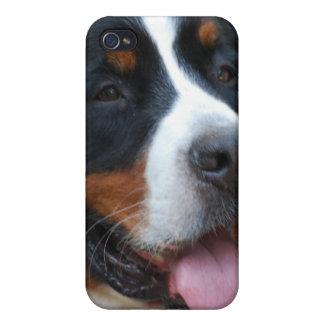 Sweet Bernese iPhone 4 Case