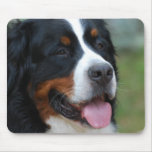 Sweet Bernese Mouse Pad