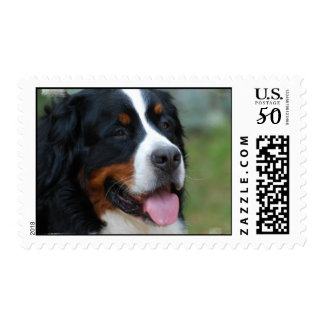 Sweet Bernese Postage Stamp