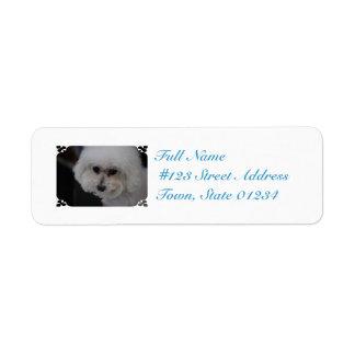 Sweet Bichon Frise Custom Return Address Labels