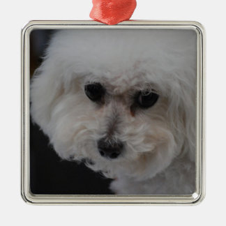 Sweet Bichon Frise Metal Ornament