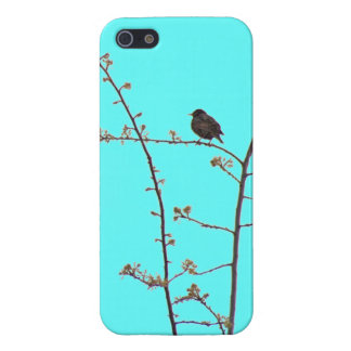 Sweet bird teal pink spring blossoms iPhone SE/5/5s cover