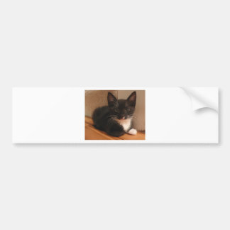 Sweet black and white Kitten looking at YOU Bumper Sticker