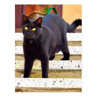 Sweet black cat - Postcard