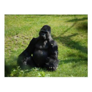 Sweet Black Monkey Gorilla Postcard