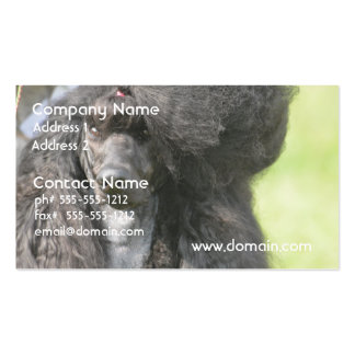 Sweet Black Poodle Double-Sided Standard Business Cards (Pack Of 100)