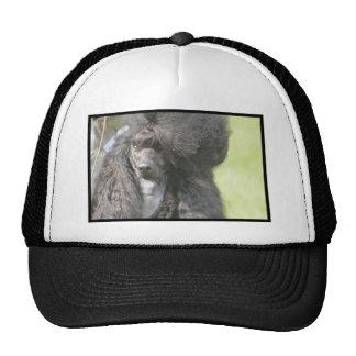 Sweet Black Poodle Mesh Hats
