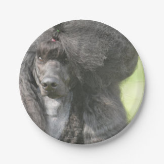 Sweet Black Poodle 7 Inch Paper Plate