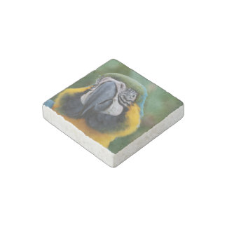 Sweet Blue and Gold Macaw Stone Magnet