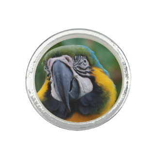 Sweet Blue and Gold Macaw Photo Ring