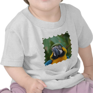 Sweet Blue and Gold Macaw T Shirt