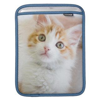 Sweet Blue Eyed Kitty iPad Sleeve