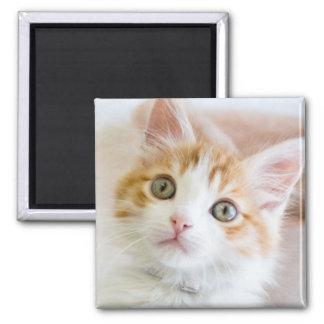 Sweet Blue Eyed Kitty Magnet