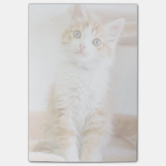 Sweet Blue Eyed Kitty Post-it Notes