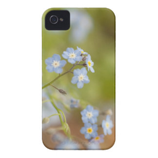 Sweet Blue Flowers iPhone 4 Case-Mate Case