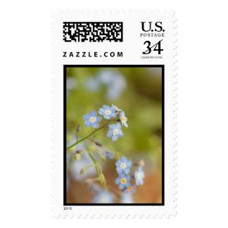 Sweet Blue Flowers Postage