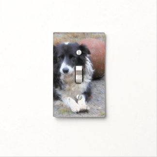 Sweet Border Collie Dog With Ball Switch Plate Cover