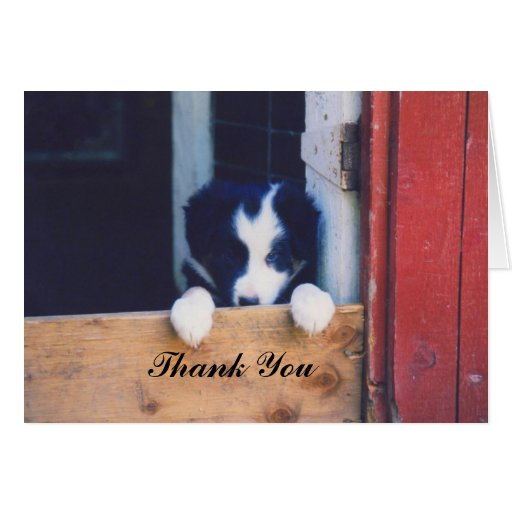 Sweet Border Collie Puppy Dog Thank You Card