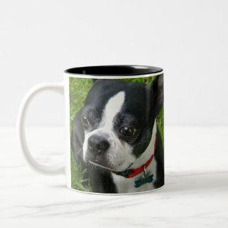 SWEET boston Terrier Mug
