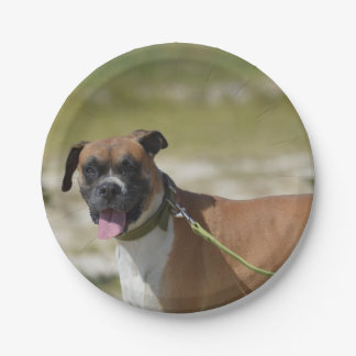 Sweet Boxer 7 Inch Paper Plate