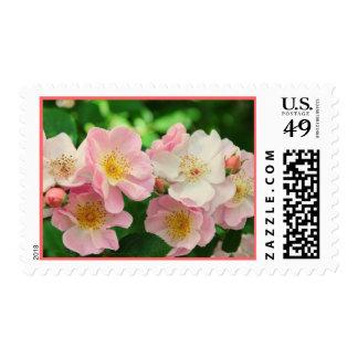 Sweet Briar Roses Postage