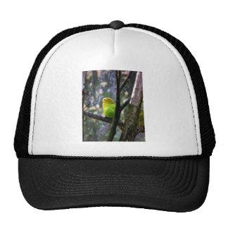 Sweet Budgie Trucker Hat