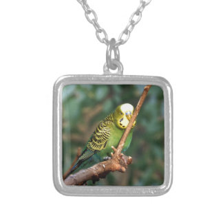 Sweet Budgie Personalized Necklace