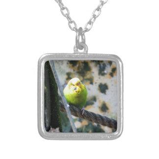 Sweet Budgie Jewelry