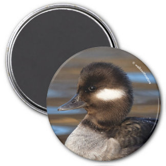 Sweet Bufflehead Duck on Sunlit Waters Magnet