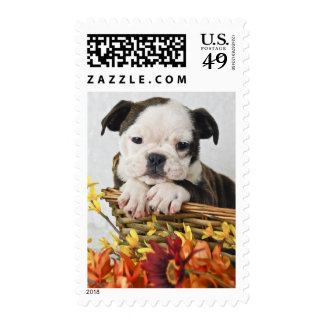 Sweet Bulldog Puppy Stamp
