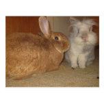 sweet bunnies postcard