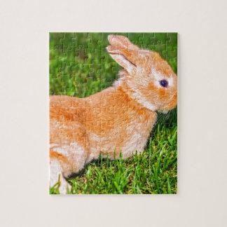 sweet bunny jigsaw puzzle
