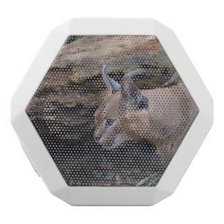 Sweet Caracal White Boombot Rex Bluetooth Speaker