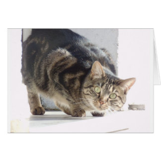 Sweet Cat Greeting Card