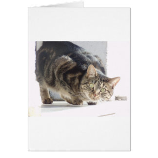 Sweet Cat Cards