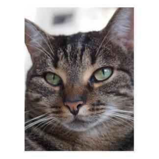 Sweet Cat Green Eyes Portrait, Pet Domestic Animal Postcard