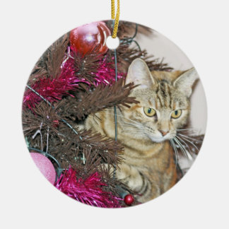 sweet cat inside a christmas tree ornament